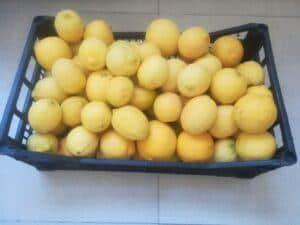 organic lemons from the backyard.